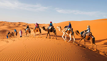 Camel Ride Sunrise Tour