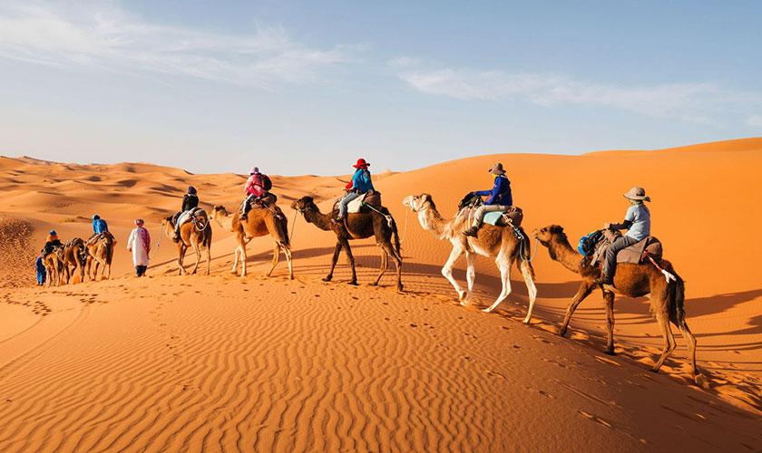 Camel Ride Sunrise Tour